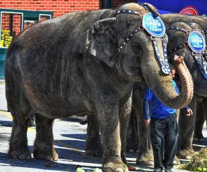 6-importantes-causas-animais-para-defender-2015-1