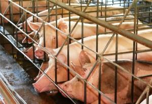 6-importantes-causas-animais-para-defender-2015-3