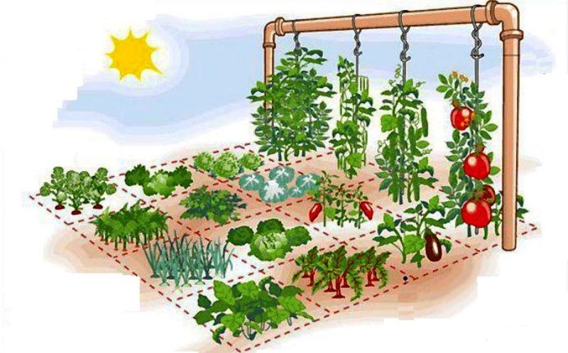Hogar y jardin c mo hacer un huerto en casa tomando s lo 1 m - Como hacer un huerto en el jardin ...