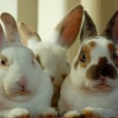 42 marcas de cosméticos do Brasil que não testam em animais